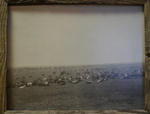 Stewarts Collection Cattle Round Up 1885