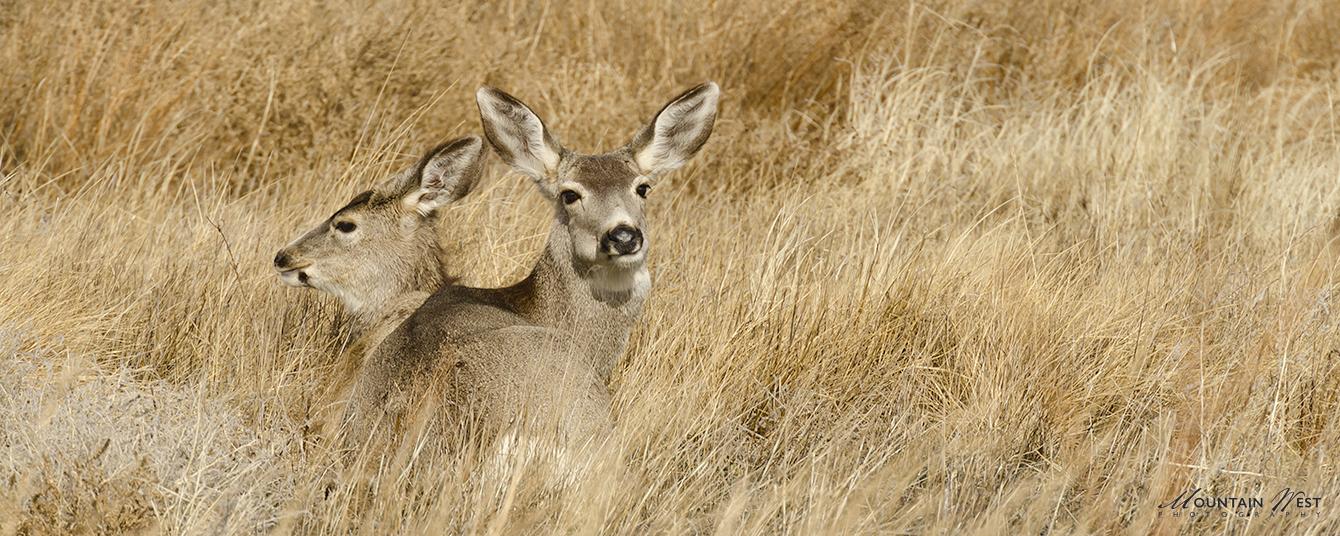Dave Snyder Deer MWP