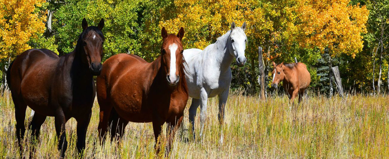 Horses by Todd Ciccarelli EPC staff