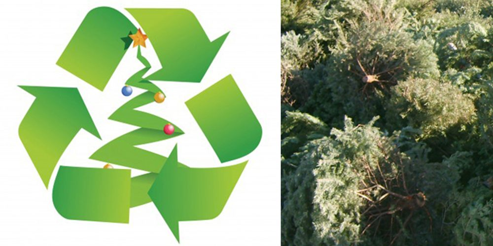 Christmas Tree Recycle.Recycle Your Christmas Tree El Paso County Colorado
